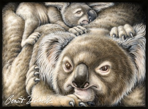 Koalas coincés – Acrylique sur toile – 81 x 60 cm