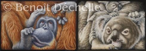 Orang-outan coincé – 146 x 97 cm et Koalas coincés – 81 x 60 cm – Acryliques sur toile